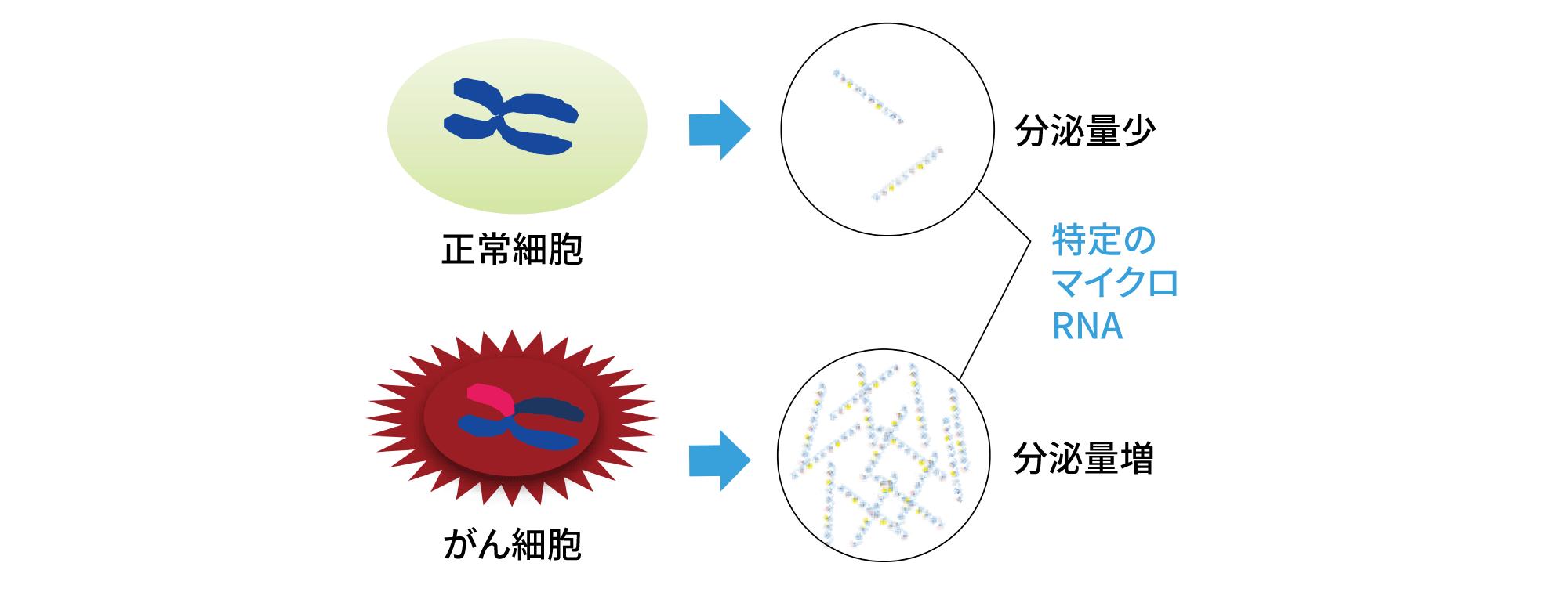 がん細胞で分泌量が増えるマイクロRNAを検出することで、がんの有無を判別