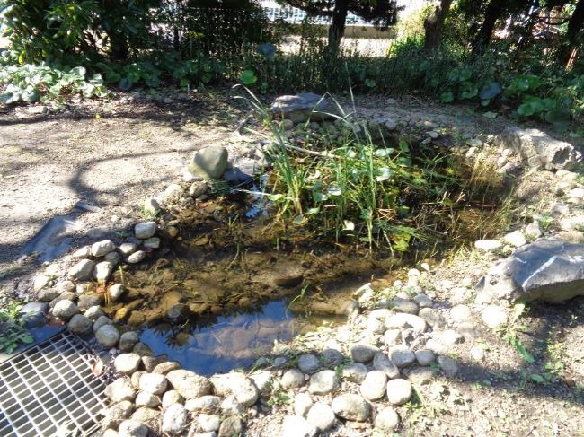 池の水量や石の配置など小さな改善を積み上げて生物にとってより良い環境をつくる