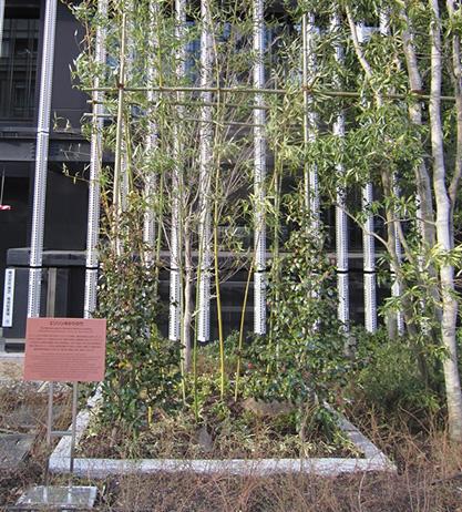 川崎にある東芝スマートコミュニティセンターには同じ石清水八幡宮から譲り受けた竹が植えられている